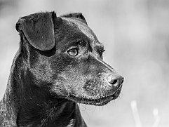 anfälle bei hunden